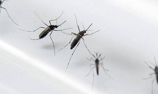 863441 - Situação de Barra do Corda volta a ser considerada de Alto Risco para um surto de dengue - minuto barra