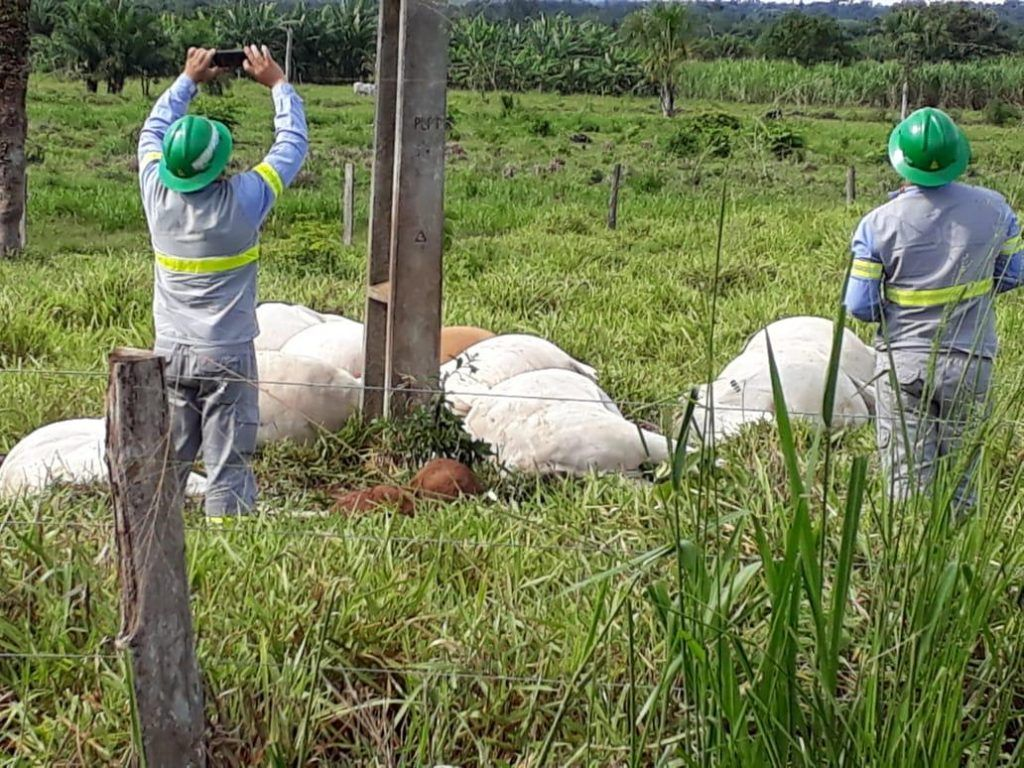 IMG 20190223 WA0051 1024x768 - URGENTE!! Descarga elétrica mata 9 vacas, e um boi avaliado em 15 mil reais - minuto barra