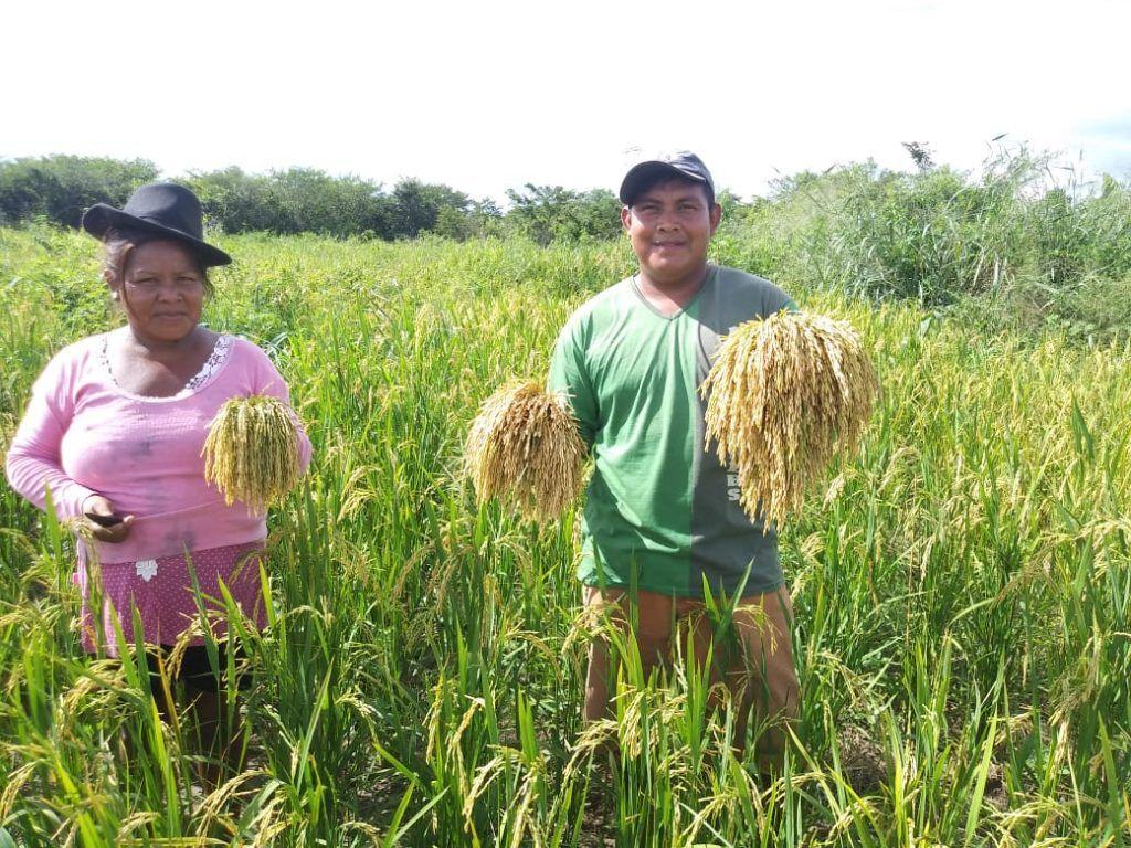 IMG 20190424 WA0150 1024x768 - Prefeito Moisés doa sementes e indígenas iniciam colheita de arroz, feijão e milho em Jenipapo dos Vieiras - minuto barra